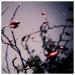 sklib-20081009-0060.jpg