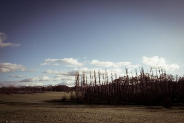 noch mehr Wiese mit Baum